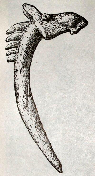 «Жезл» с головой лося.  Из Оленеостровского могильника.